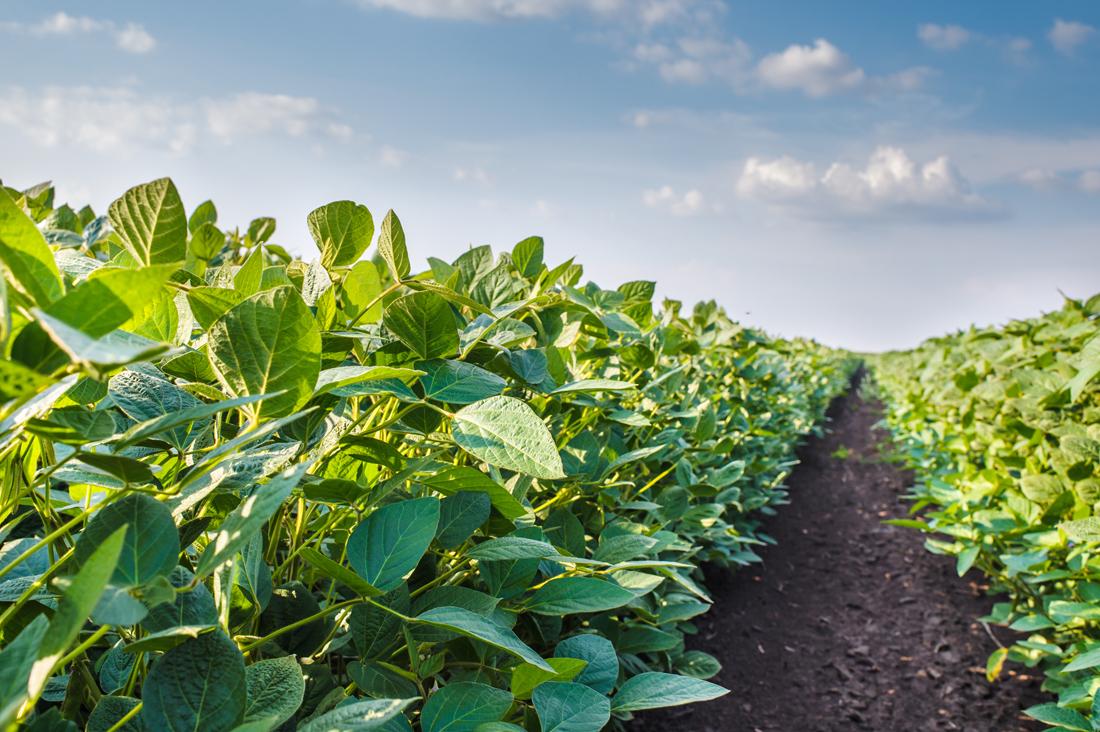 Как повысить урожайность почвы?